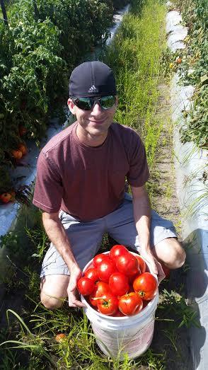 Husband Tomatoes